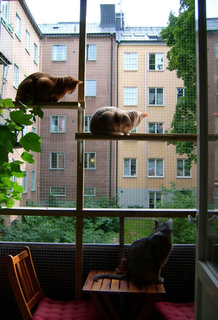 schutzgitter für katzen balkon Draht Holzregale cats   Chat aire ...