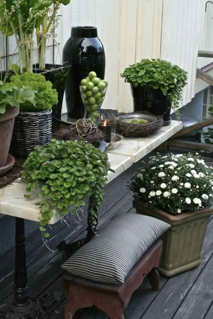 Great grouping of containers   Gardens   Pinterest   Gardens ...