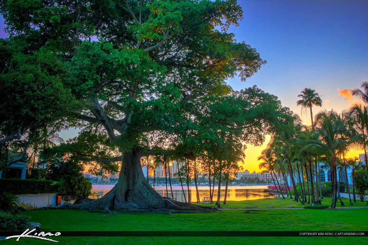 West Palm Beach Kapok Banyan Tree Flagler | Florida Photography ...