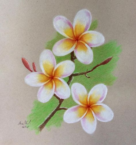 ad8deddb2042b Flowers by soft pastels #flower#pastels#drawing#pictures#paper#colour #spring#art#softpastel#frangipani#