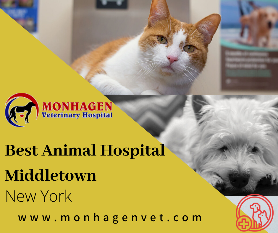 Monhagen Veterinary Hospital Is Best Animal Hospital In Middletown