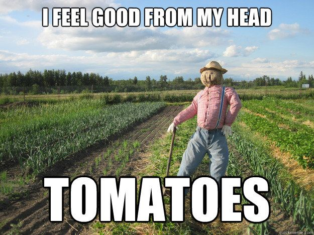 31438b5a1c59729c5dd347af66f4d4a8 i feel good from my head tomatoes scarecrow memes for me