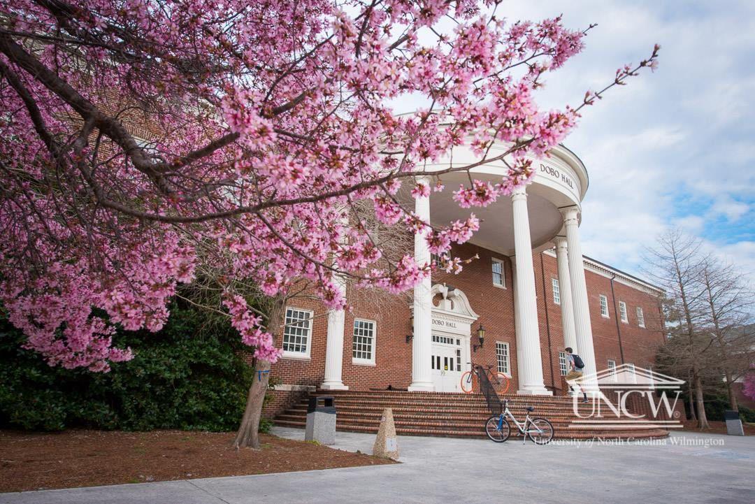 Dobo in the spring uncw university of north carolina
