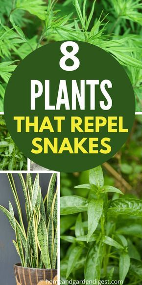 Top 8 Plants That Repel Snakes (Natural Snake Repellent ...