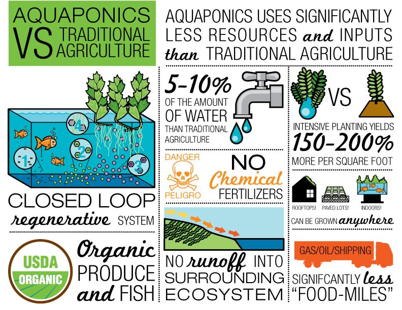 Aquaponics vs  Traditional Agriculture Custom infographic
