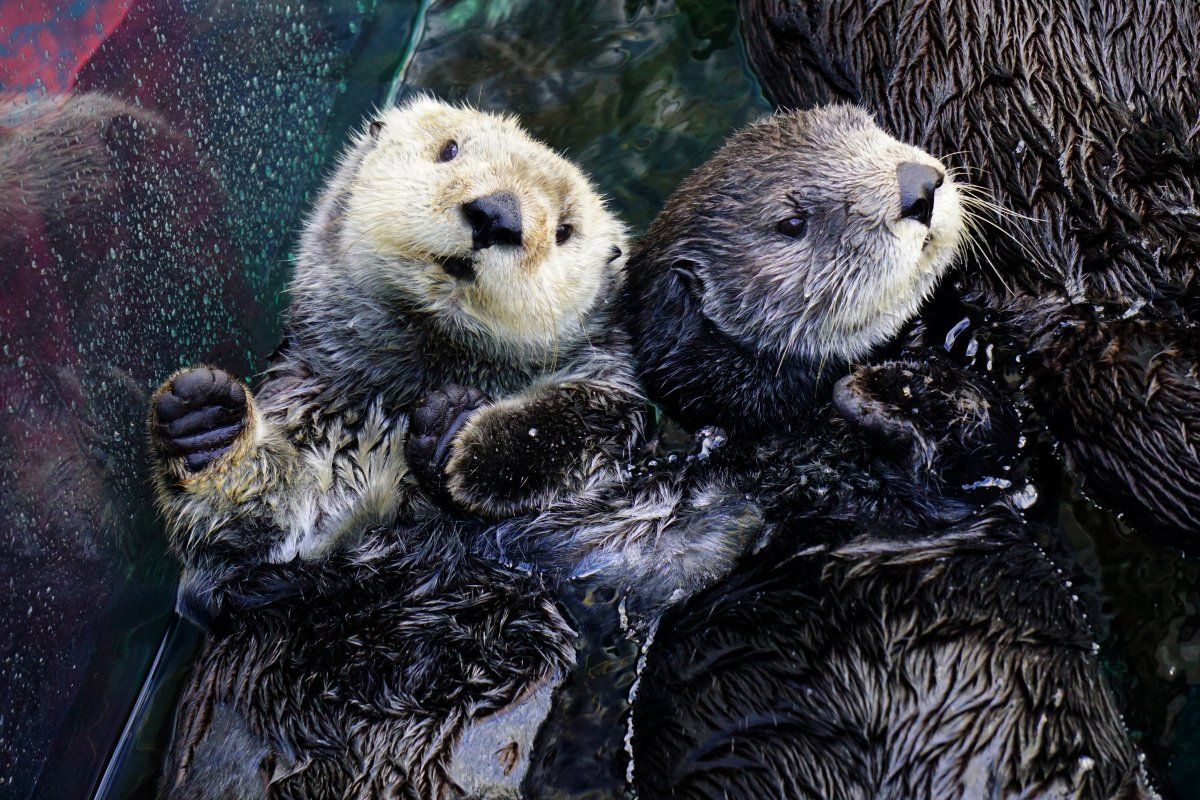 Take a break with some highlevel cuteness on World Otter
