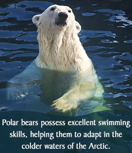Fiercely Interesting Facts About Polar Bears | Editorial, Fun ...