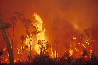 Traditional Aboriginal Burning Savanna Org Au All Fire Html Burn