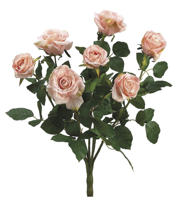 "Bloom Room 17"" Confetti Rose Bush-Pink & Green"