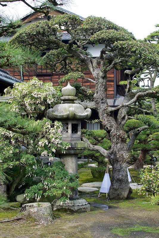Hiunkaku Garden Japan Garden Small Japanese Garden Japanese