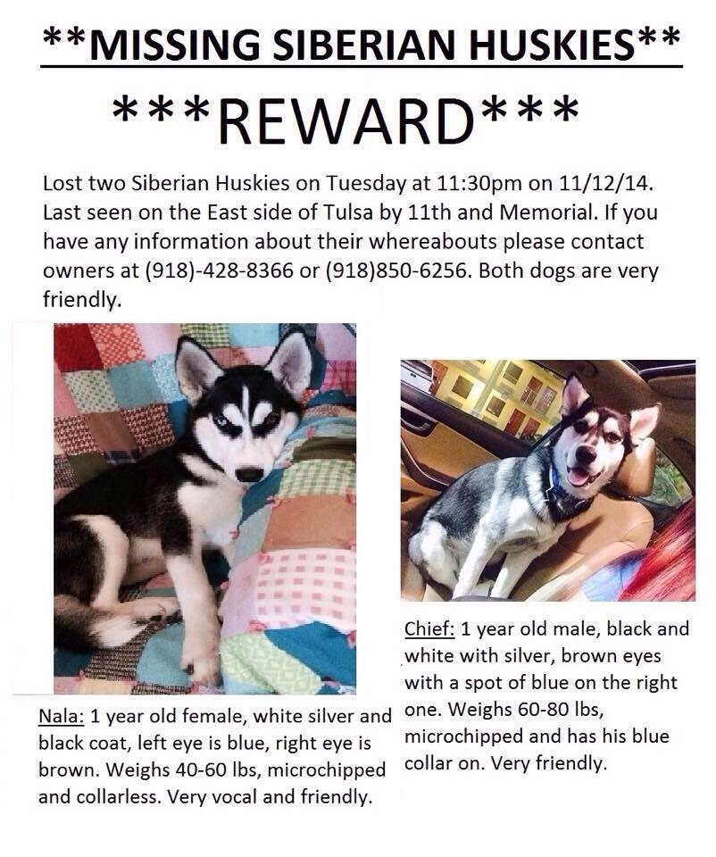 Pin By Us Lost Dog Registry On B W Lost Siberian Huskies Us Lost