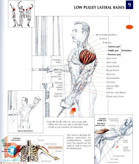 تمارين لعضلات الظهر بالصور والكتفين
