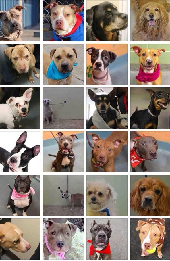 Please #adopt a #dog from HIGH KILL @NYCACC shelter in #Manhattan #NYC   http://www.nycacc.org