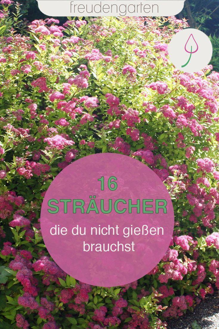 STRÄUCHER, DENEN TROCKENHEIT NICHTS AUSMACHT - freudengarten