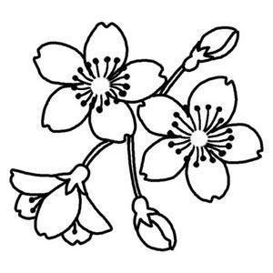 桜 白黒イラスト 桜のぬりえ塗り絵イラスト素材画像集さくら