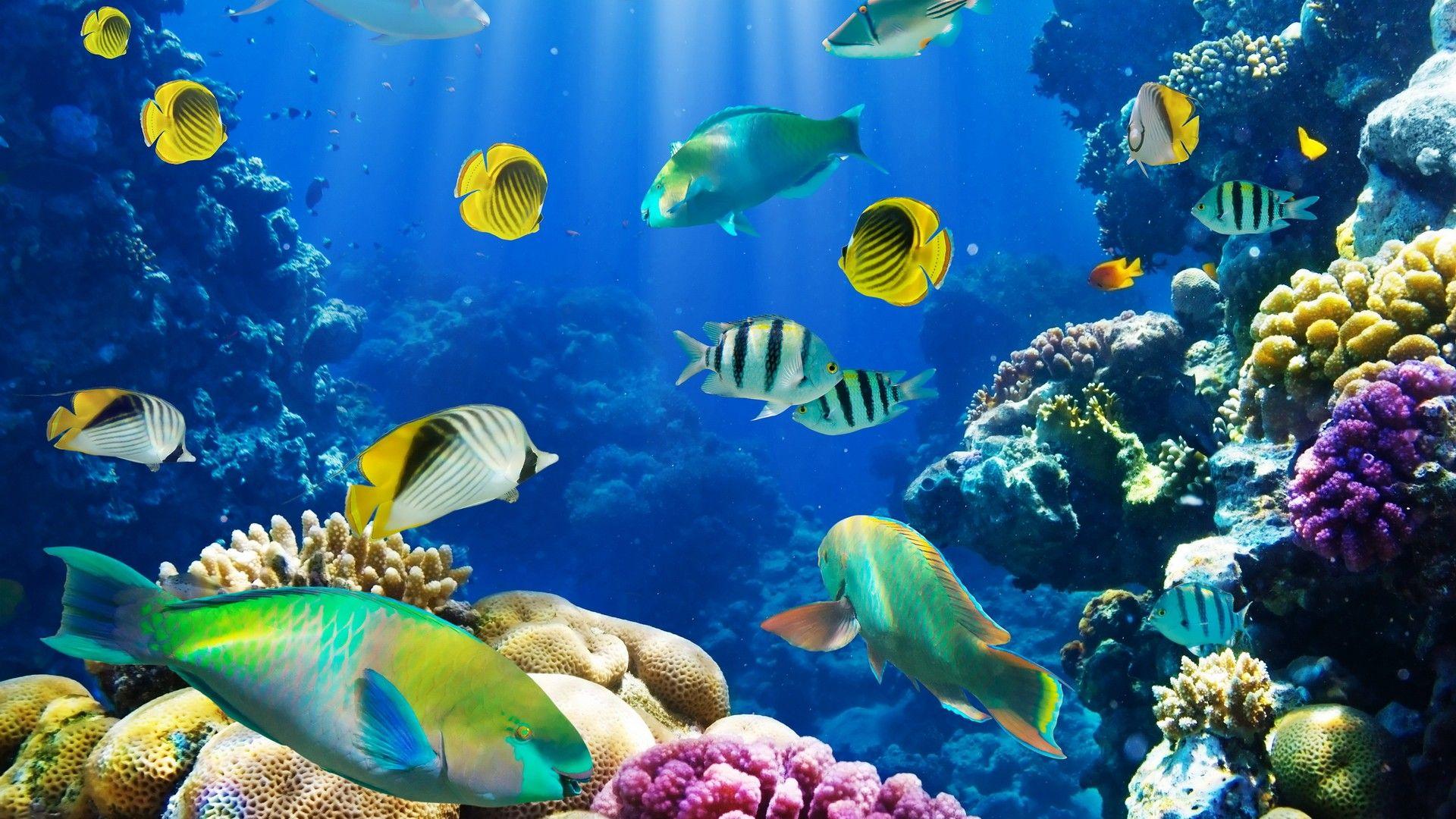 Nature Coral Fish Hd Wallpaper Fish Wallpaper Fish Background Tropical Fish Aquarium