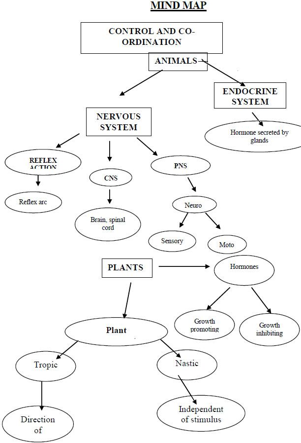 control and coordination biology mind maps pinterest science
