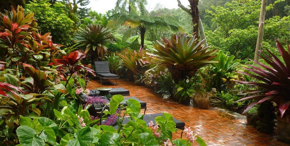 Tropical Gardens | Tropical Gardens Of Hawaii With Graham Ross | Ross Garden  Tours