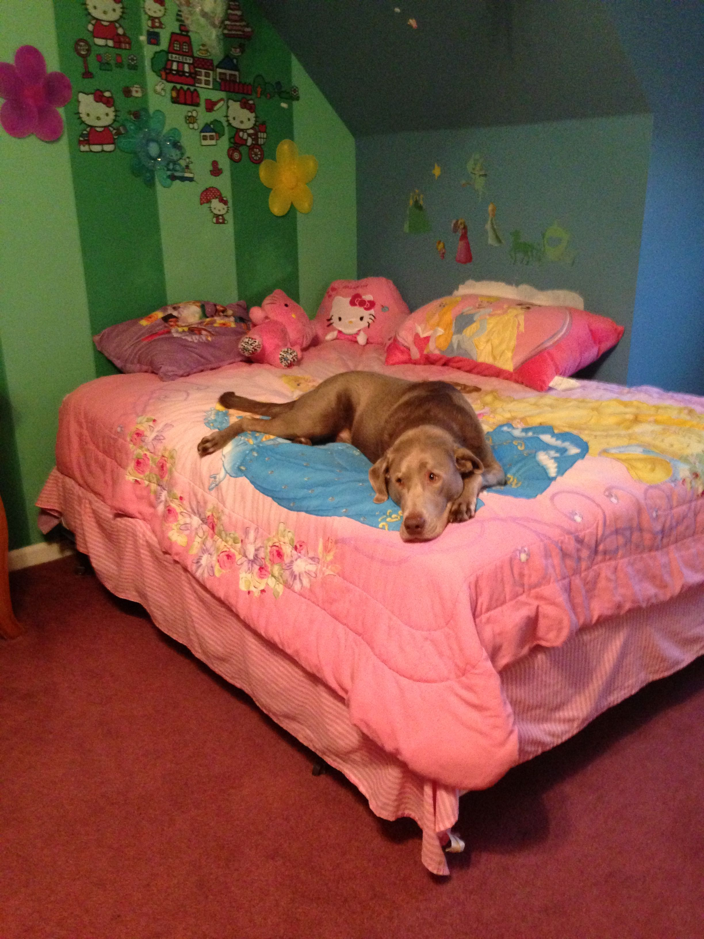 Busted... You caught me on the Princess bed...don't tell