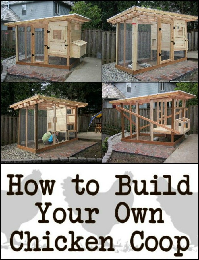 Build Your Chooks a Home And Get Fresh Eggs in Return With This