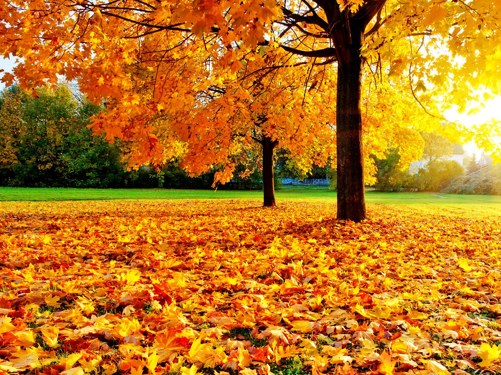 central park autumn wallpaper Car Pictures 資料