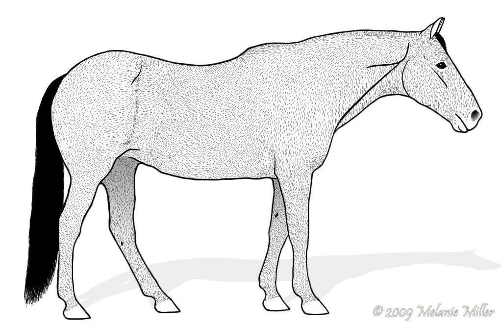 Pin By Hermiona Nowogrd On Modele Koskich Figurek Pinterest Horse