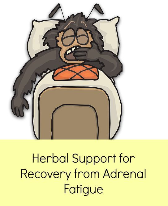 High Quality Adrenal Gland Supplements   Natural remedies