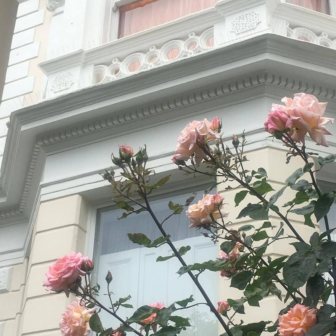 Pinterest Flhowerly Pink Aesthetic Flower Aesthetic