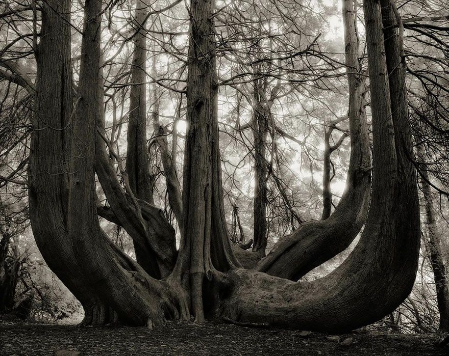 ancient-trees-beth-moon-14 -- Beth Moon, a photographer based in San Francisco, has been searching for the world's oldest trees for the past 14 years.