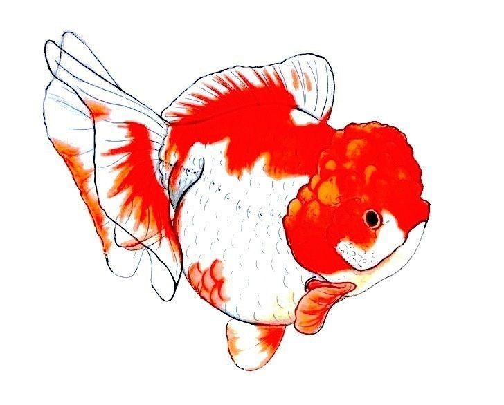 Pin By Taller Light Blue Arte Y Disen On Crafty Stuffy Goldfish Art Fish Art Aquatic Art