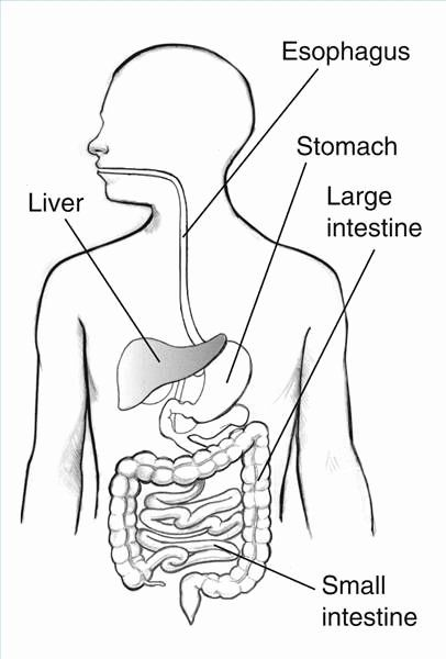 Digestive System Coloring Page Luxury Digestive System