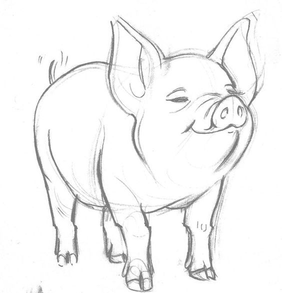 Image result for cute pig pencil drawing