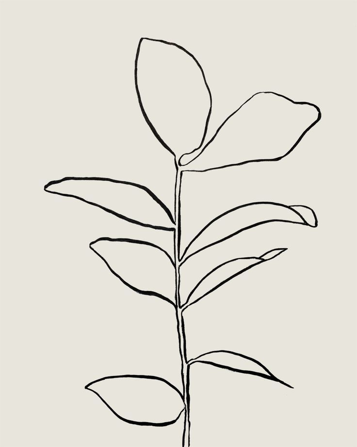 House plant study, I, sumi on paper, by tristan b ...