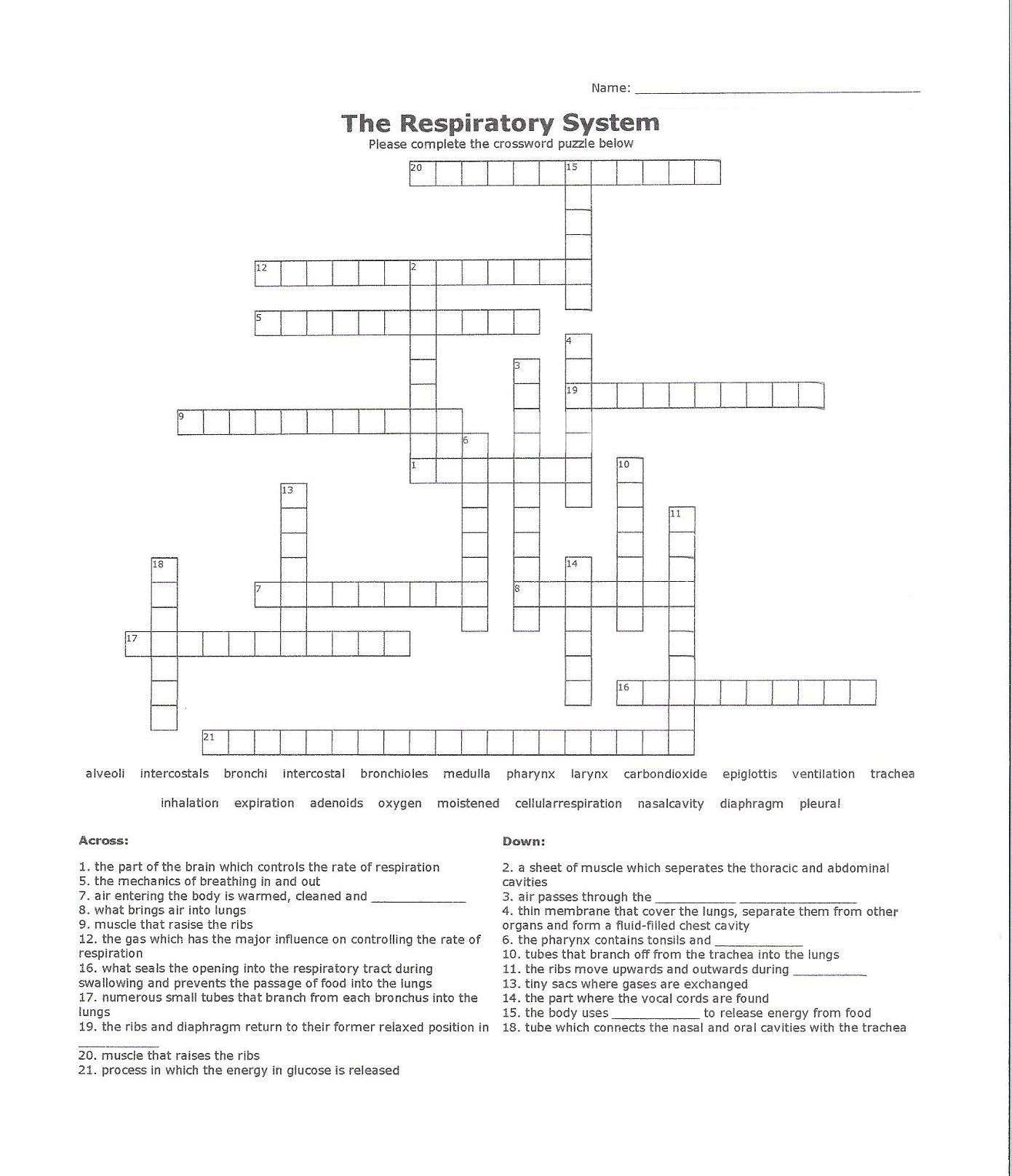 Respiratory System Crossword Puzzle
