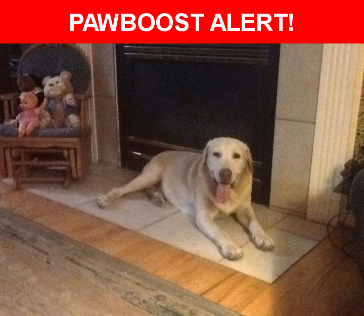 Please spread the word! Ringer was last seen in Columbia, SC 29223.  Description: Yellow lab. 14 yrs old. Hard of hearing and has seizures  Nearest Address: North springs and brickyard