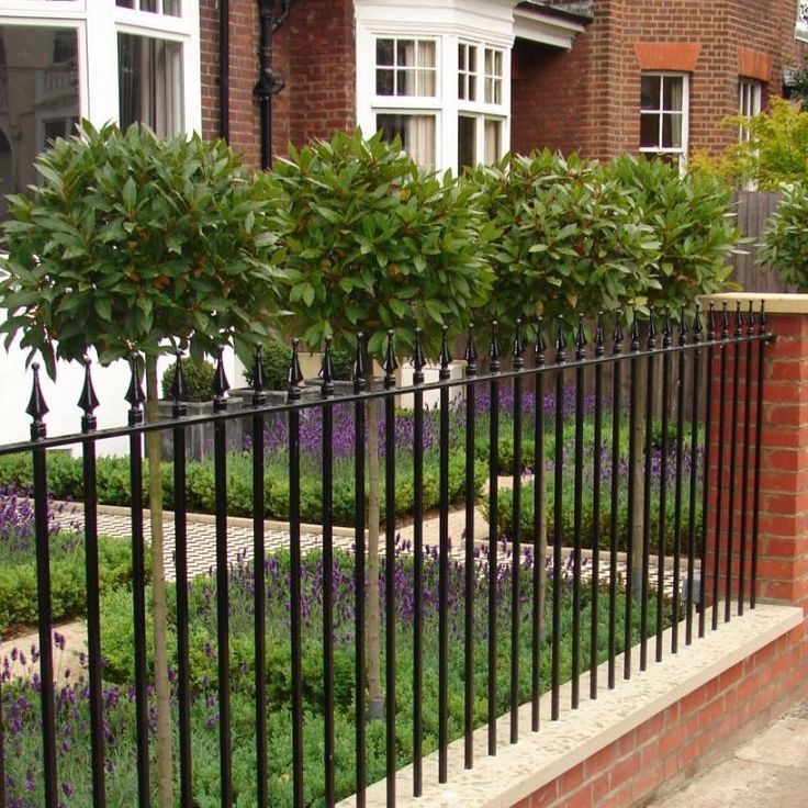 a gorgeous modern country front garden  behind smart cast iron railings  four bay trees stand