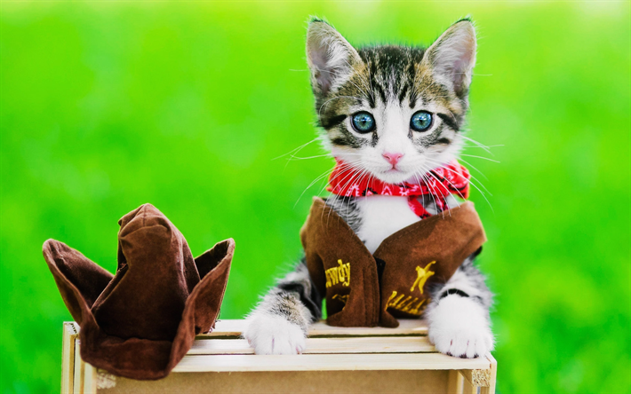 Download wallpapers small kitten, cowboy, blue eyes, cats