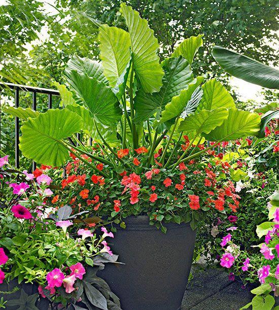 Gardendesign Books: Container Garden Design Basics