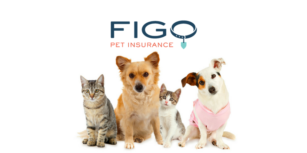 Get An Unbiased Review Of Tech Pet Company Figo Pet Insurance
