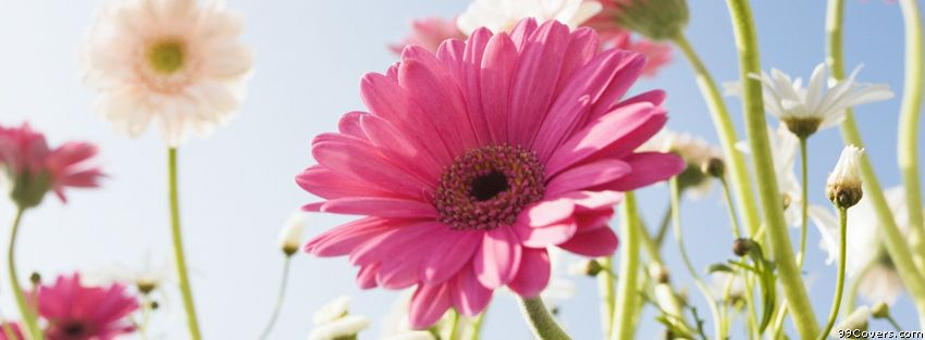 Garden Different Flowers Facebook Covers