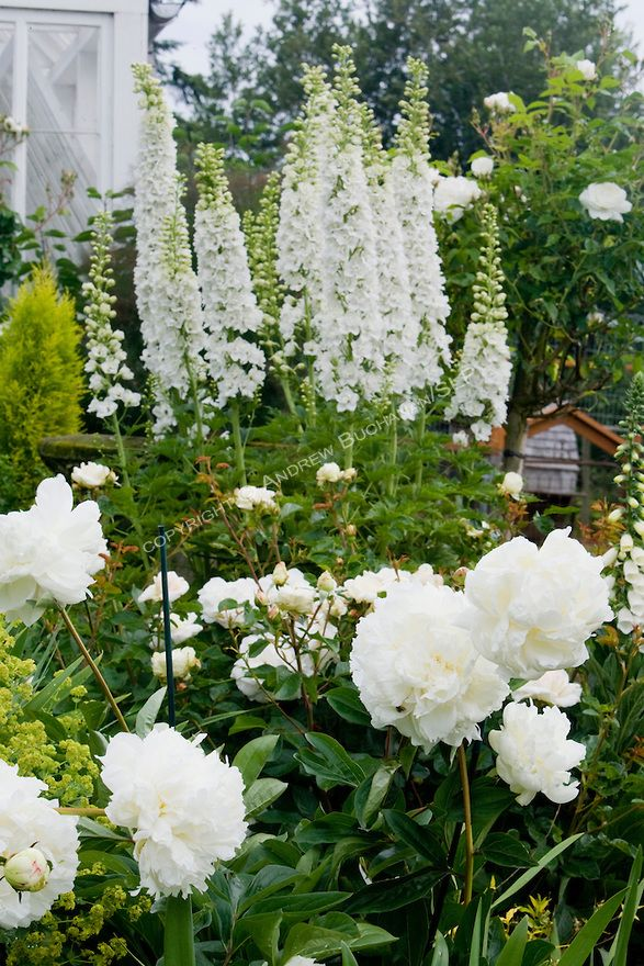 A vignette of white delphinium stalks, peonies, and roses in the