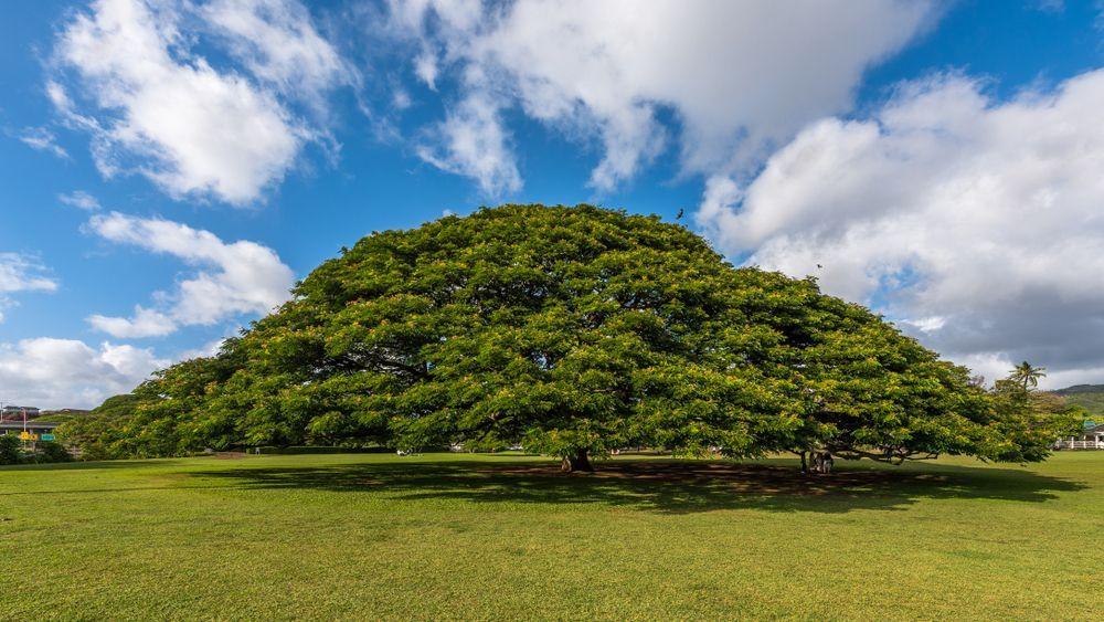 Cm の この 木 なん 木