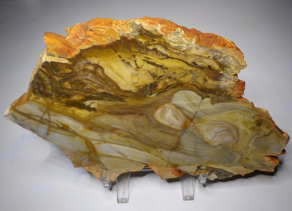 Stromatolite Microbialite Fossil Barkly Tableland Northern Territory S107 Trilobite Fossil Northern Territory Fossil