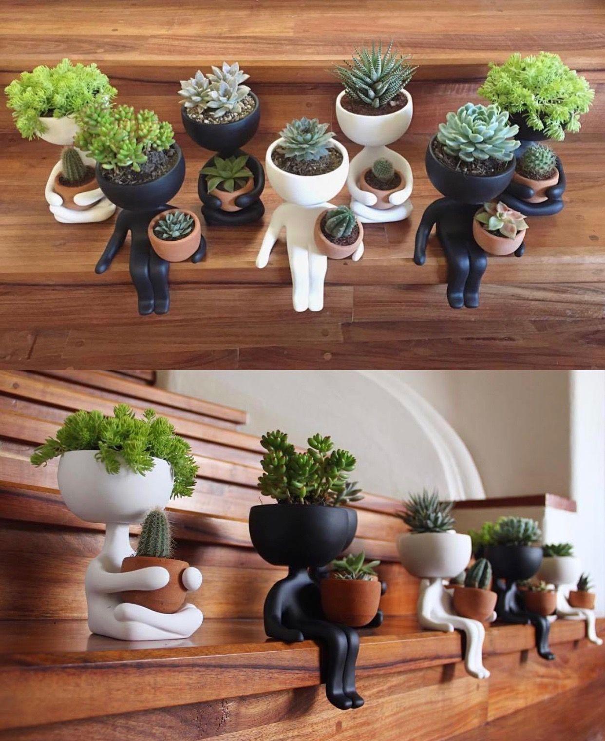 pingl par show case sur d co plante deco plant. Black Bedroom Furniture Sets. Home Design Ideas