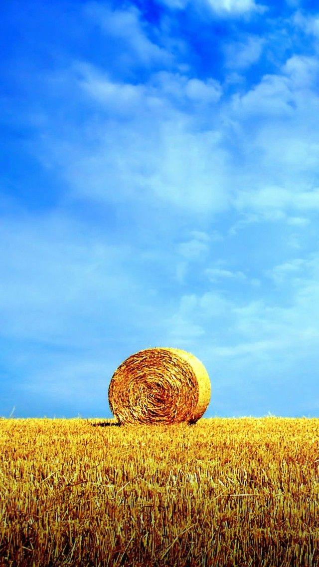 Wheat Field Blue Sky Iphone 5 Wallpapers Iphone 6 Plus