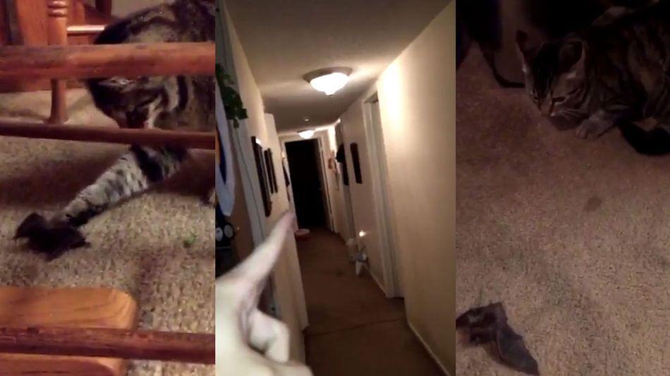 Cat brings home live bat, absolute chaos ensues - http://blog.clairepeetz.com/cat-brings-home-live-bat-absolute-chaos-ensues/