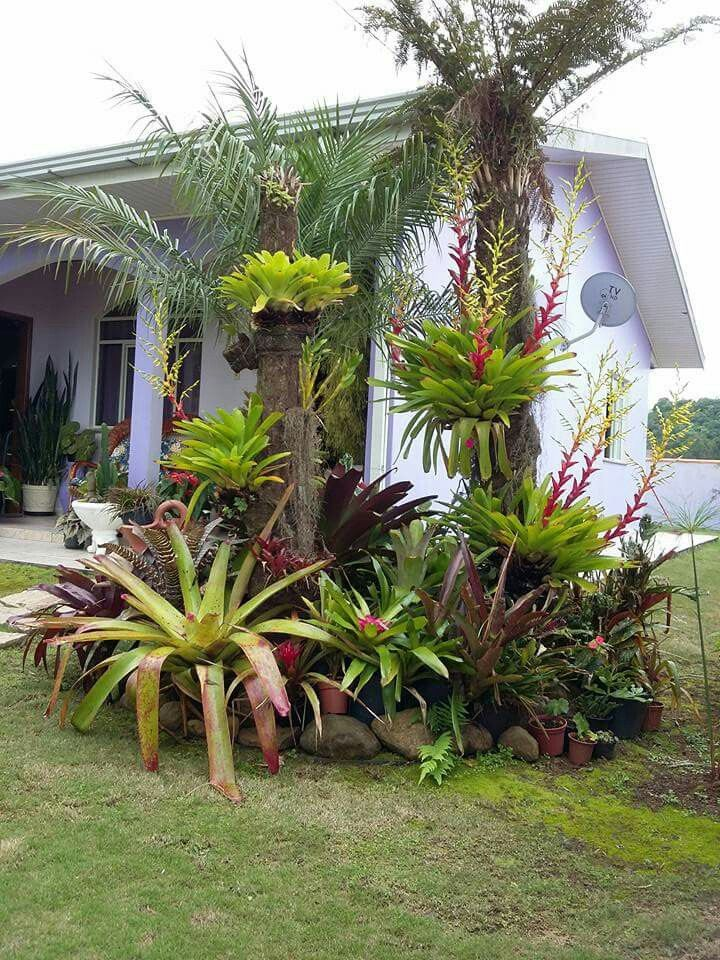 garden tropical with palm trees - and bromeliads outdoor living