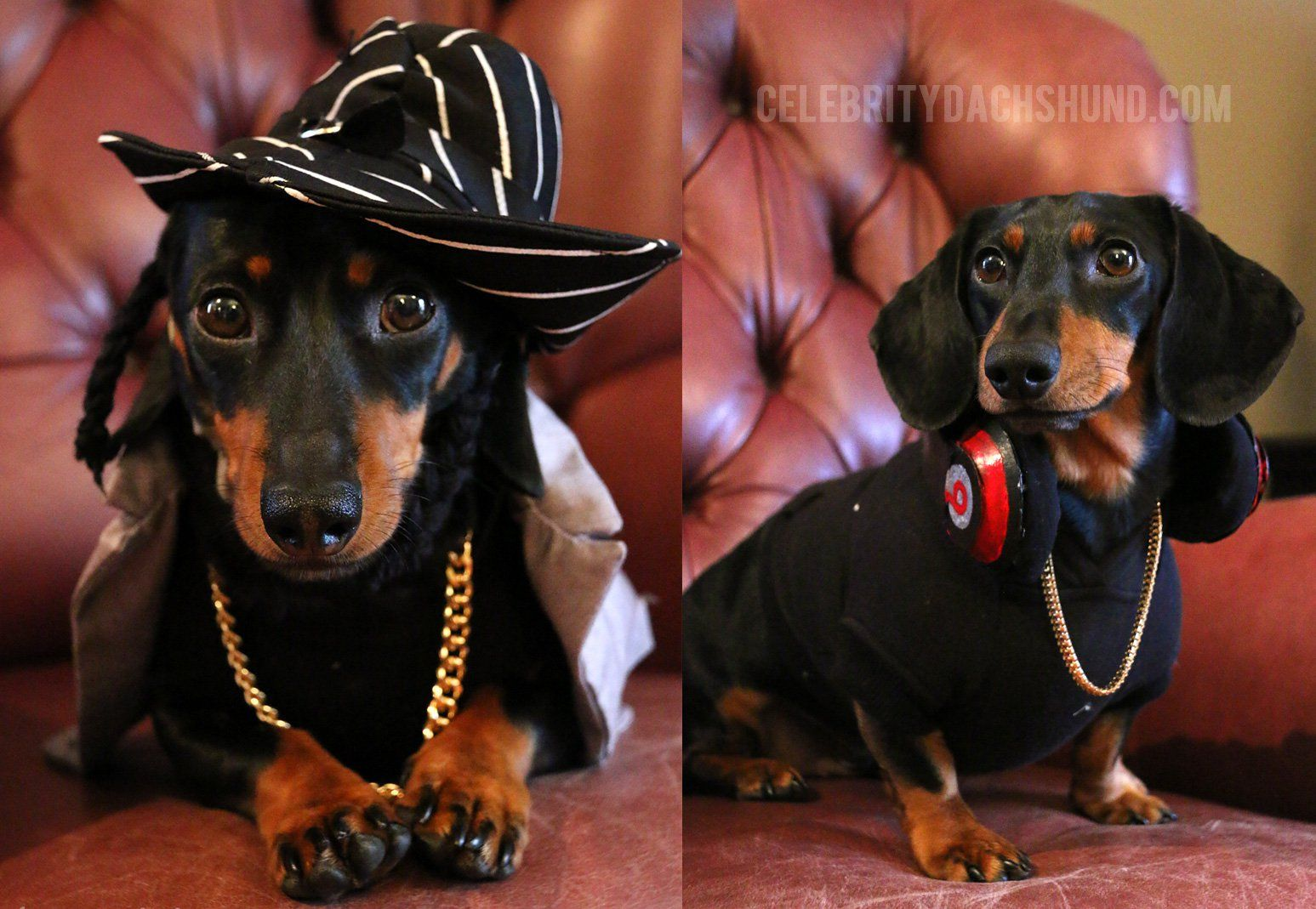 dr. dre and snoop dogg dog costumes | dachshund | dogs, dachshund