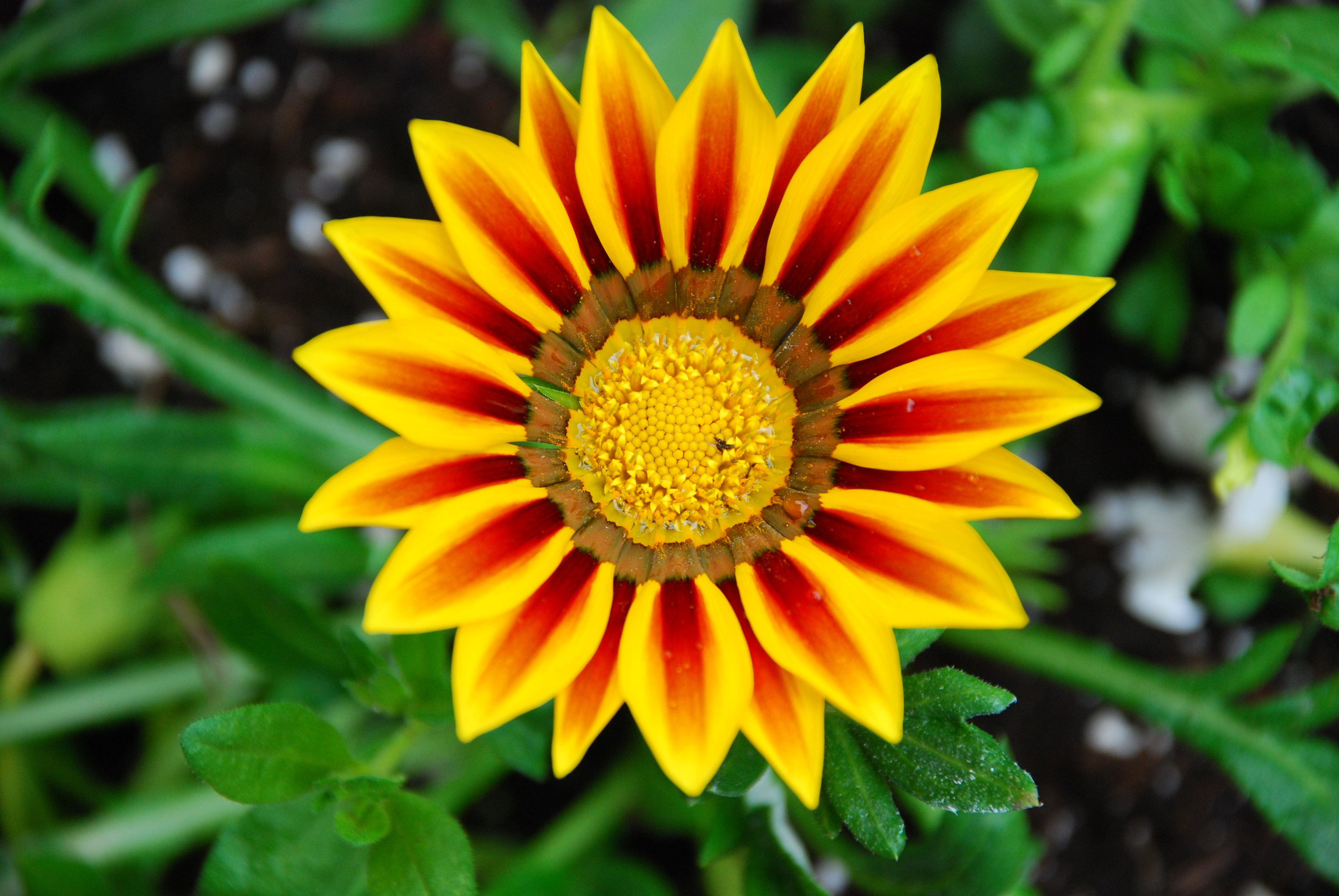 High Resolution Flower Wallpaper: Flowers Images High Resolution Wallpaper