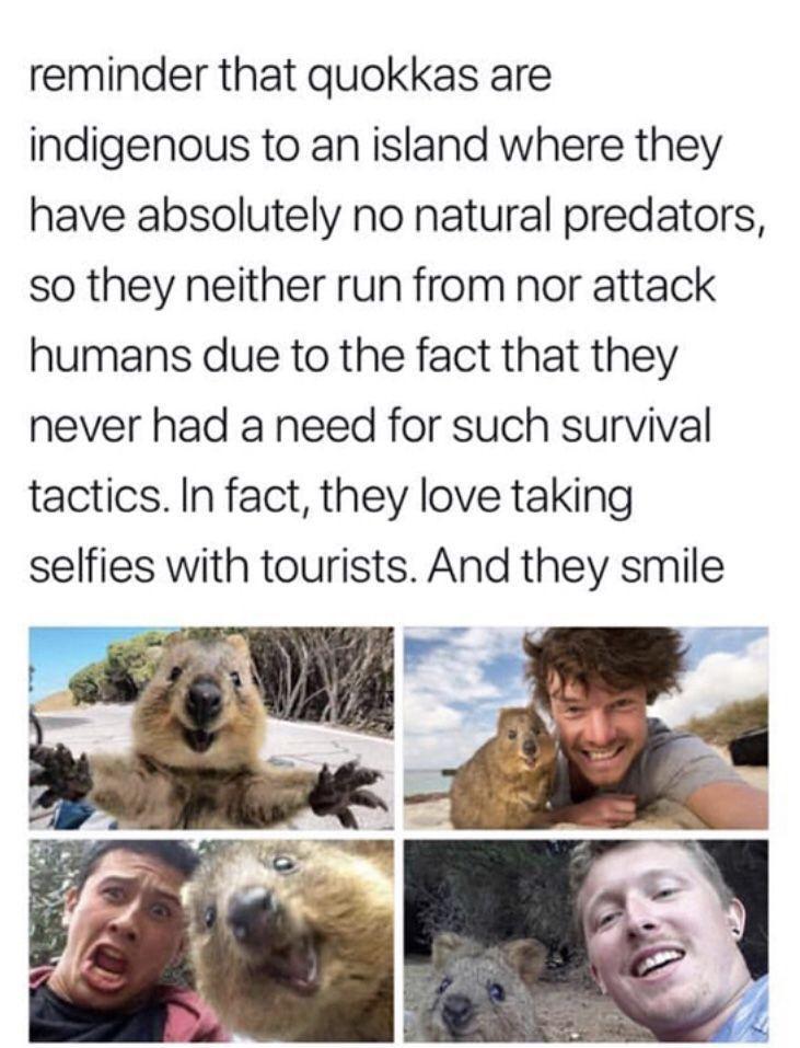 Pinterest Tsyai Aiѕuyasѕye In 2020 Cute Funny Animals Animal Memes Animals